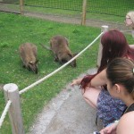 Wallaby_people1